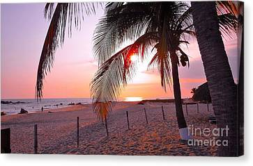 Palm Collection - Sunset Canvas Print by Victor K