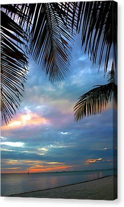 Palm Curtains Canvas Print by Susanne Van Hulst