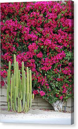 Palm Desert Blooms Canvas Print