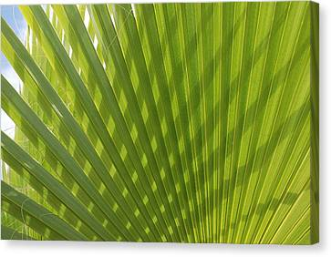 Palm Fingers Canvas Print by Dallas Hyatt