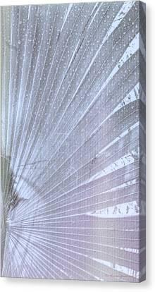 Palm Frond High Key Rh Canvas Print
