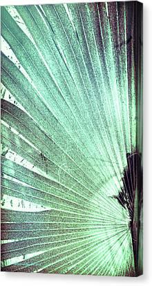 Palm Frond-lh Canvas Print