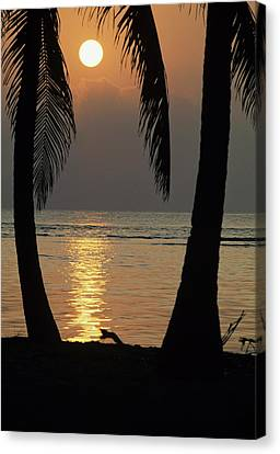 Palm Fronds And Sunset Over Caribbean Canvas Print