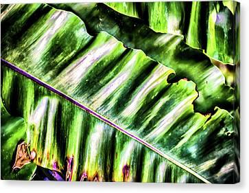 Palm Fronds Up Close Canvas Print