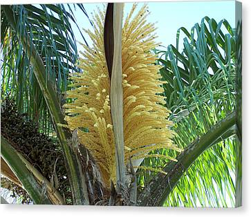 Palm In Bloom Canvas Print by Evelyn Patrick