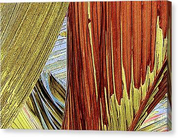 Canvas Print featuring the photograph Palm Leaf Abstract by Ben and Raisa Gertsberg