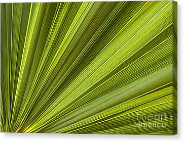 Palm Leaf Abstract Canvas Print by Elena Elisseeva