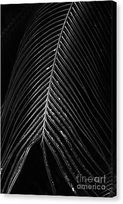Canvas Print featuring the photograph Palm Leaf by Deborah Benoit