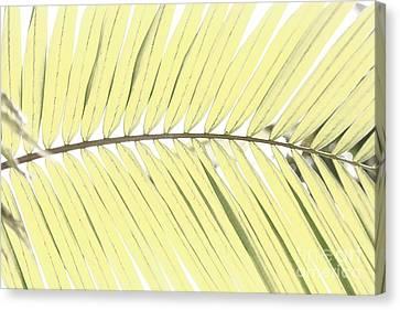 Palm Leaf Canvas Print by Gaspar Avila