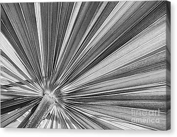 Palm Leaf In Black And White Canvas Print