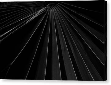 Palm Leaf Canvas Print by Roger Mullenhour