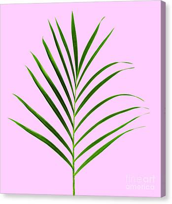 Palm Leaf Canvas Print by Tony Cordoza