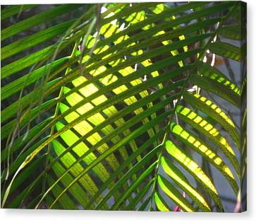 Palm Leaves In Sun Canvas Print