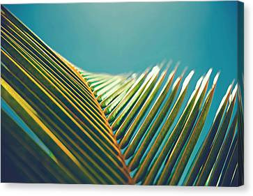 Palm Leaves In The Sun Canvas Print