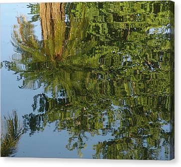 Palm Mirror Canvas Print by Florene Welebny
