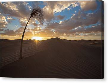 Palm On Dune Canvas Print