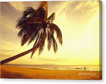 Palm Over The Beach Canvas Print by Ron Dahlquist - Printscapes