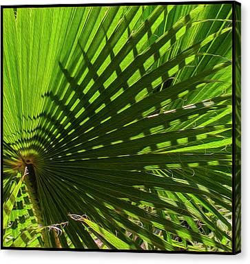 Canvas Print featuring the photograph Palm Pattern No.1 by Mark Myhaver