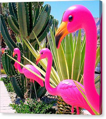 Palm Springs Flamingos 7 Canvas Print by Randall Weidner