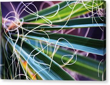 Palm Strings Canvas Print