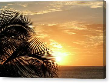 Palm Sunset 2 Canvas Print