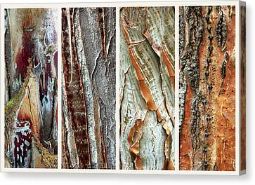Bark Design Canvas Print - Palm Tree Abstract by Jessica Jenney