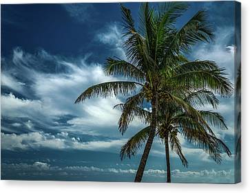 Palm Tree Against The Sky Canvas Print