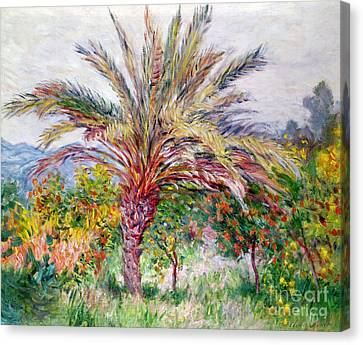 Palm Tree At Bordighera Canvas Print by Claude Monet