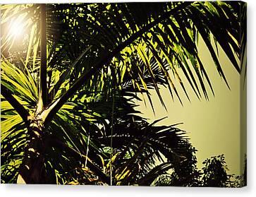 Palm Tree In Sunny Ocho Rios Jamaica Canvas Print by Patricia Awapara