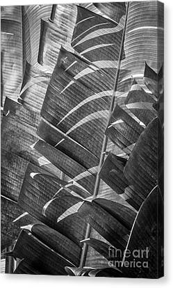 Palm Tree Leafs Canvas Print by Ernesto Ruiz