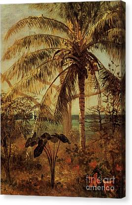 Palm Tree, Nassau, 1892  Canvas Print by Albert Bierstadt