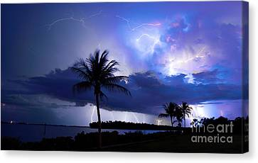 Palm Tree Nights Canvas Print