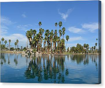 Palm Tree Reflections Canvas Print