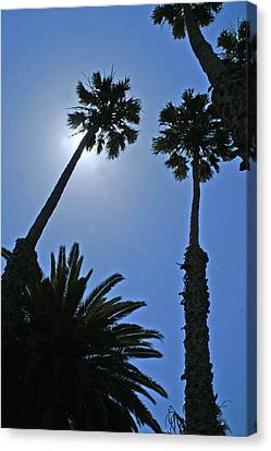 Canvas Print featuring the photograph Palm Tree Silouette by Gary Brandes