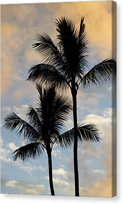 Palm Tree Sunset Hawaii Canvas Print by Dustin K Ryan