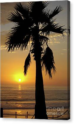 Palm Tree Sunset Canvas Print by Jim and Emily Bush