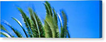 Palm Tree Top In The Wind Canvas Print by Panoramic Images