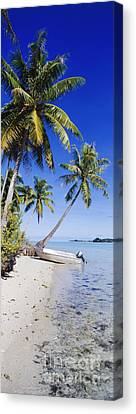 Palm Trees And Motorized Dinghy Canvas Print by Jeremy Woodhouse