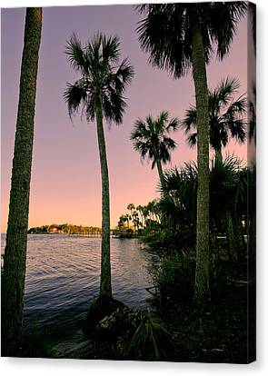 Palm Trees And Pink Skies Canvas Print by Laura DAddona