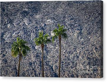 Palm Trees Canvas Print by Art K