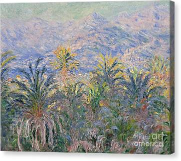 Palm Trees At Bordighera, 1884  Canvas Print by Claude Monet