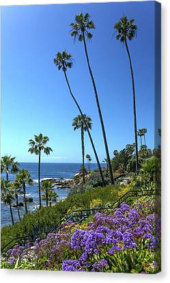Canvas Print featuring the photograph Palm Trees At Heisler Park by Cliff Wassmann