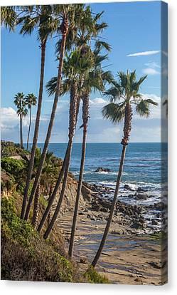 Canvas Print featuring the photograph Palm Trees At Monument Point Laguna Beach by Cliff Wassmann
