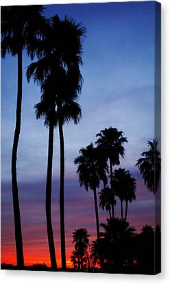 Palm Trees At Sunset Canvas Print by Jill Reger