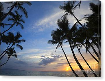 Palm Trees At Sunset, Keawekapu Beach Canvas Print by Ron Dahlquist
