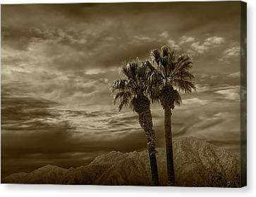 Canvas Print featuring the photograph Palm Trees By Borrego Springs In Sepia Tone by Randall Nyhof
