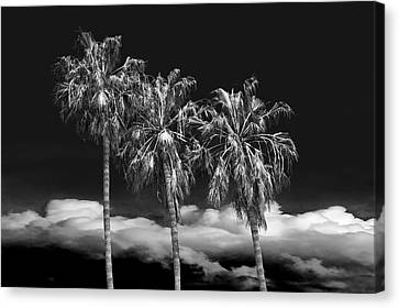 Canvas Print featuring the photograph Palm Trees In Black And White On Cabrillo Beach by Randall Nyhof