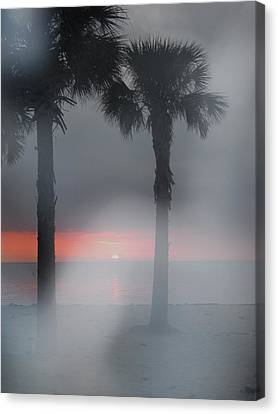 Palm Trees In The Fog Canvas Print by Penfield Hondros