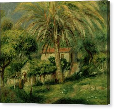 Palm Trees Canvas Print by Pierre Auguste Renoir