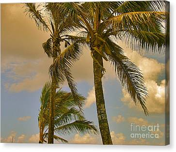 Palm Trees Canvas Print by Silvie Kendall